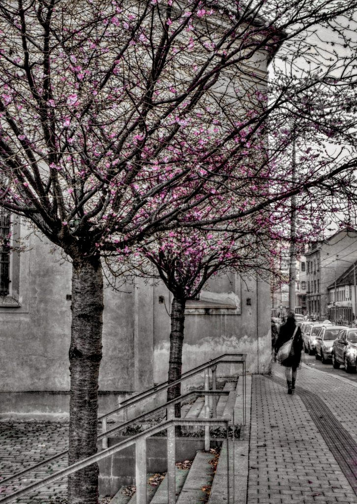 Zimní květy