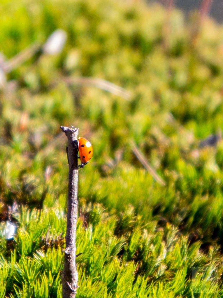Jarní hlídka