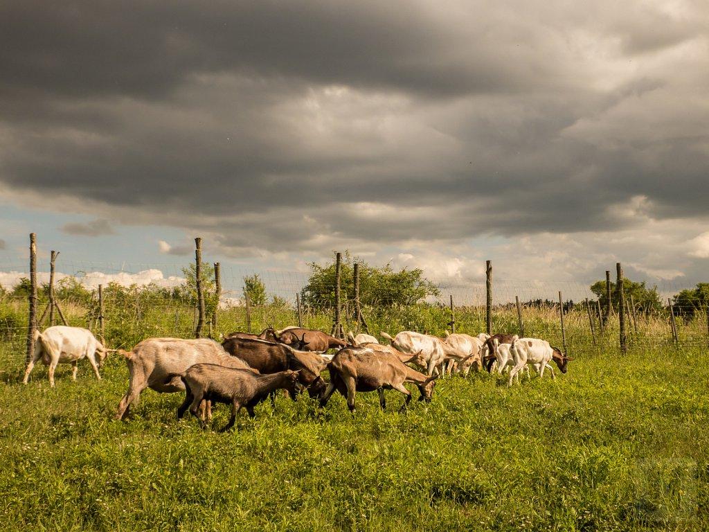 Hostina pto kozy