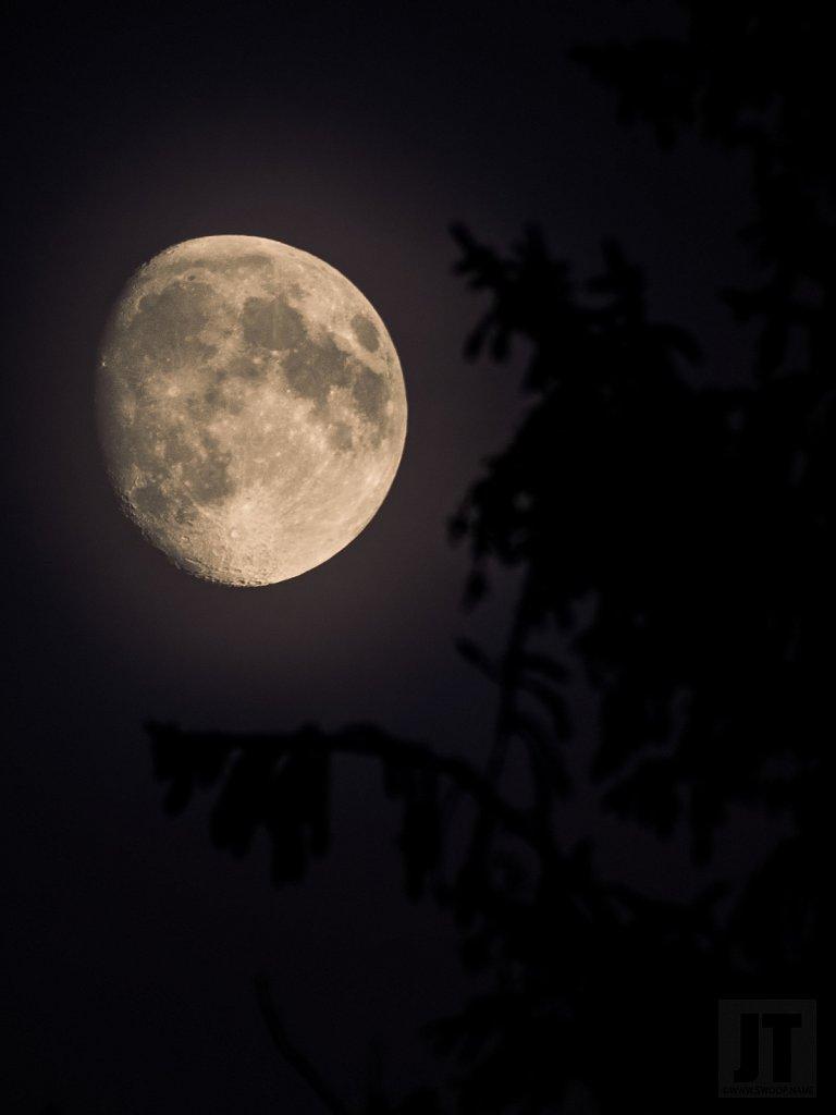 Noční lampička temného lesa