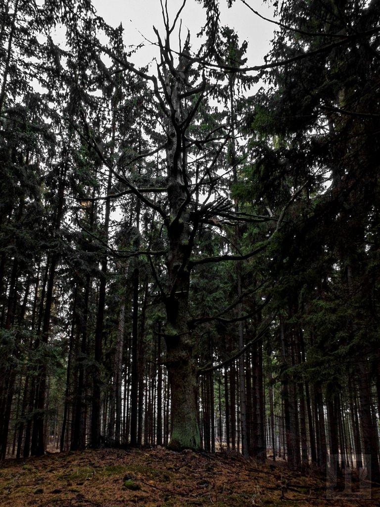Duch starých lesů