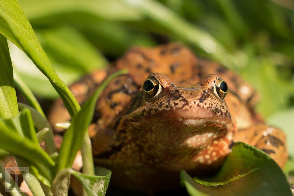 Žába na česneku II.