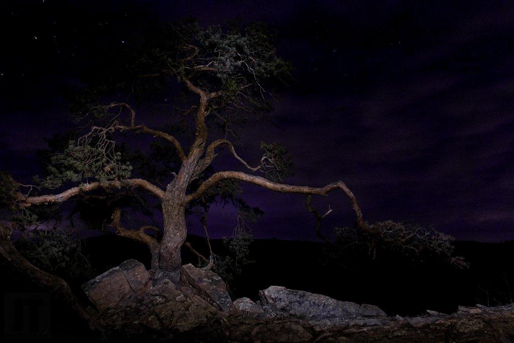 Noční hlídka