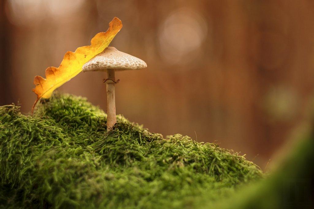 Ostatní houby