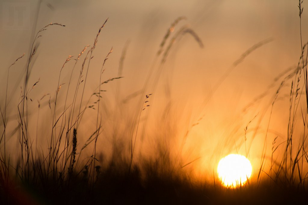 Slunko v trávě